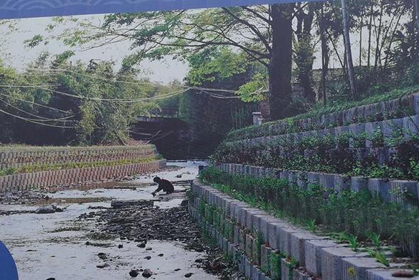 生态护岸工程实景图